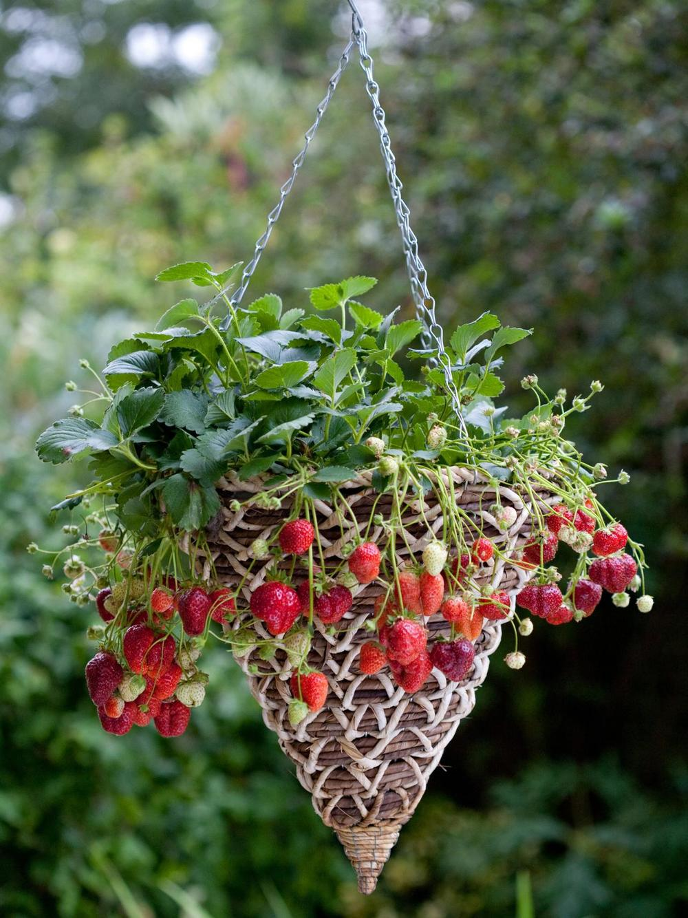 Is your garden summer-ready?